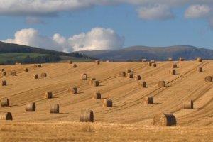 Harvest (Bild: John Haslam [CC BY 2.0], via Flickr)